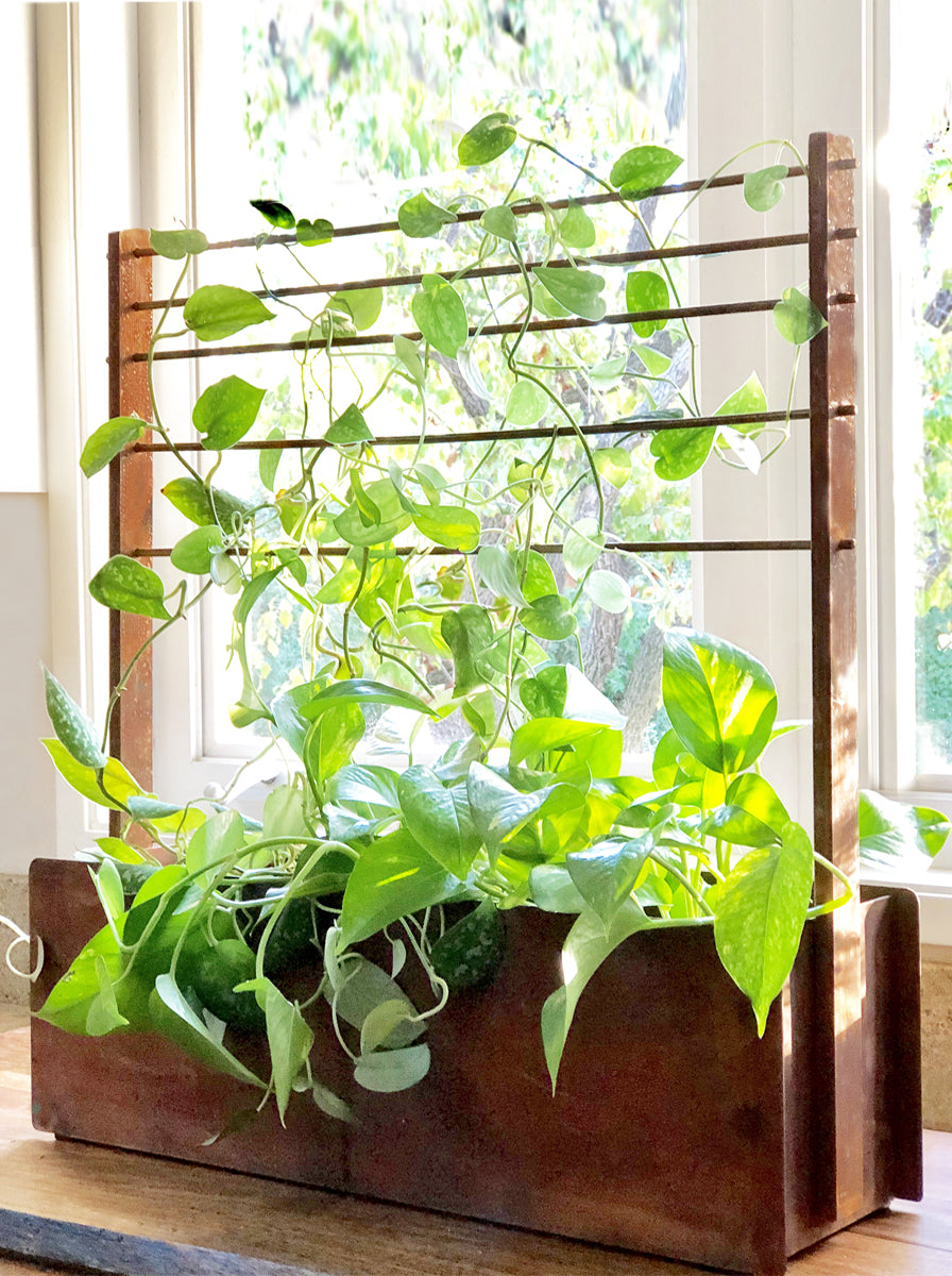 NEW! BLOOM BUNGALOW WINDOW BOX + TRELLIS