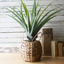Artificial Aloe in Woven Pot - Mix Home Mercantile