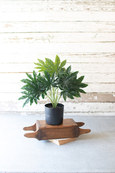 Potted Fatsia - Mix Home Mercantile