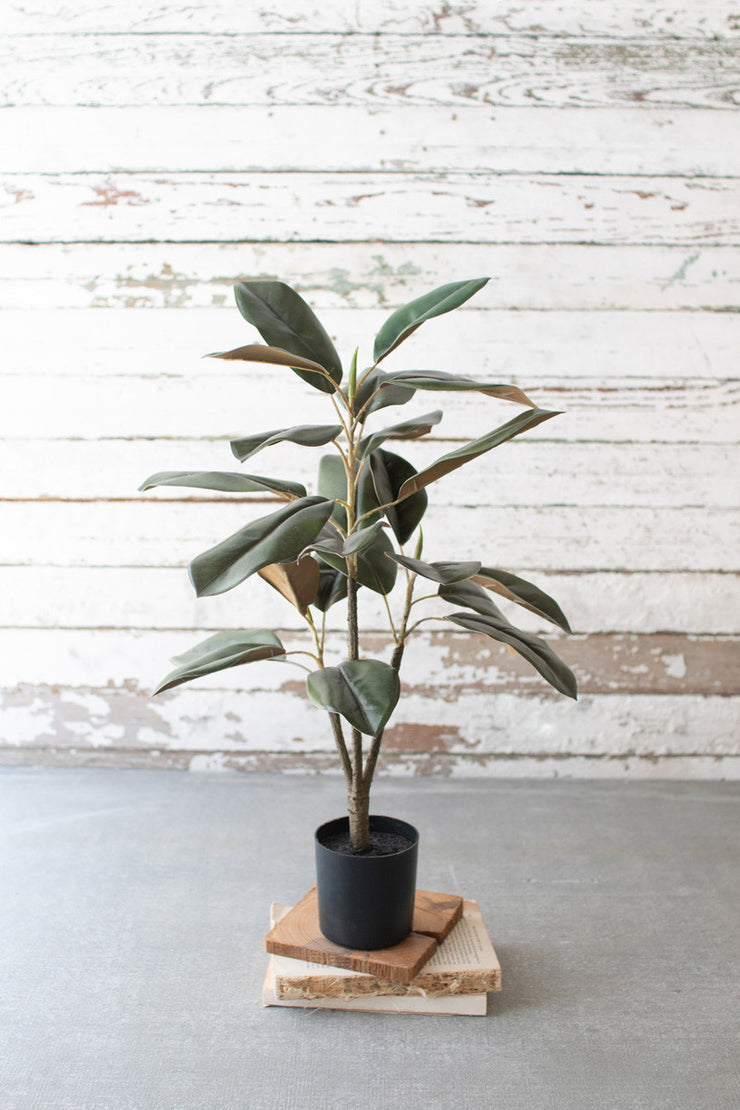 Potted Magnolia - Mix Home Mercantile