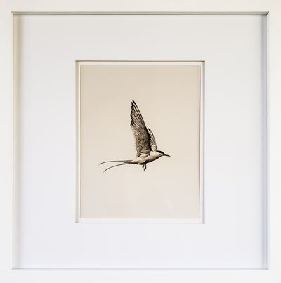 8 x 10 Framed Print - Flight - Mix Home Mercantile