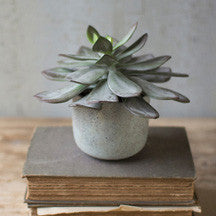 "7"" Succulent with Cement Pot"