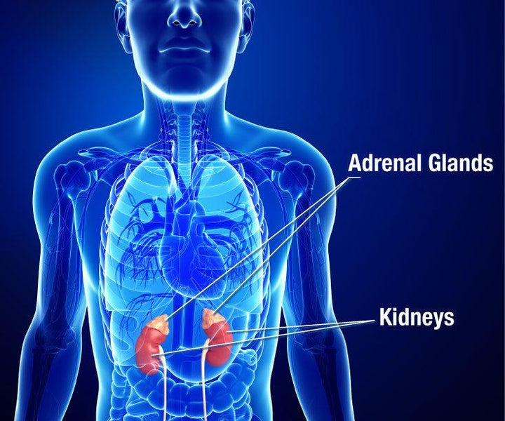 ADRENAL BURNOUT – WHAT YOU CAN DO TO RECOVER