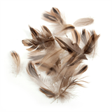 Natural Duck Feathers