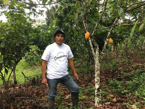 Sustainable Cacao
