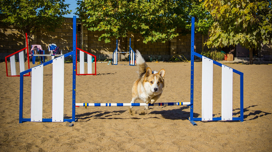 How Are Dogs Trained?