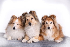 Male Vs Female Dog: What Are The Differences?