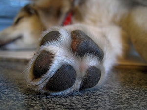 Protecting Your Dog's Paws During The Summer and Winter