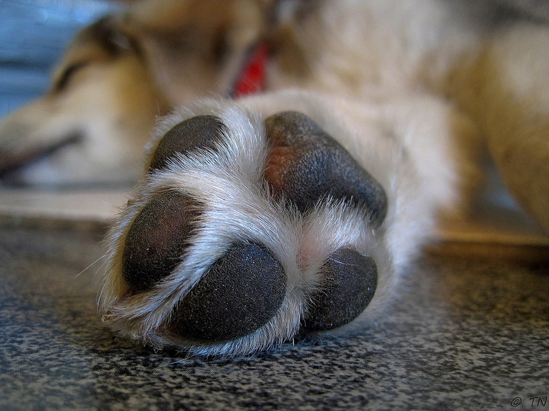 Protecting Your Dog's Paws In The Summer and Winter