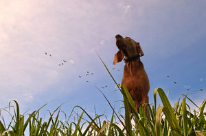 What Is A Bird Dog?