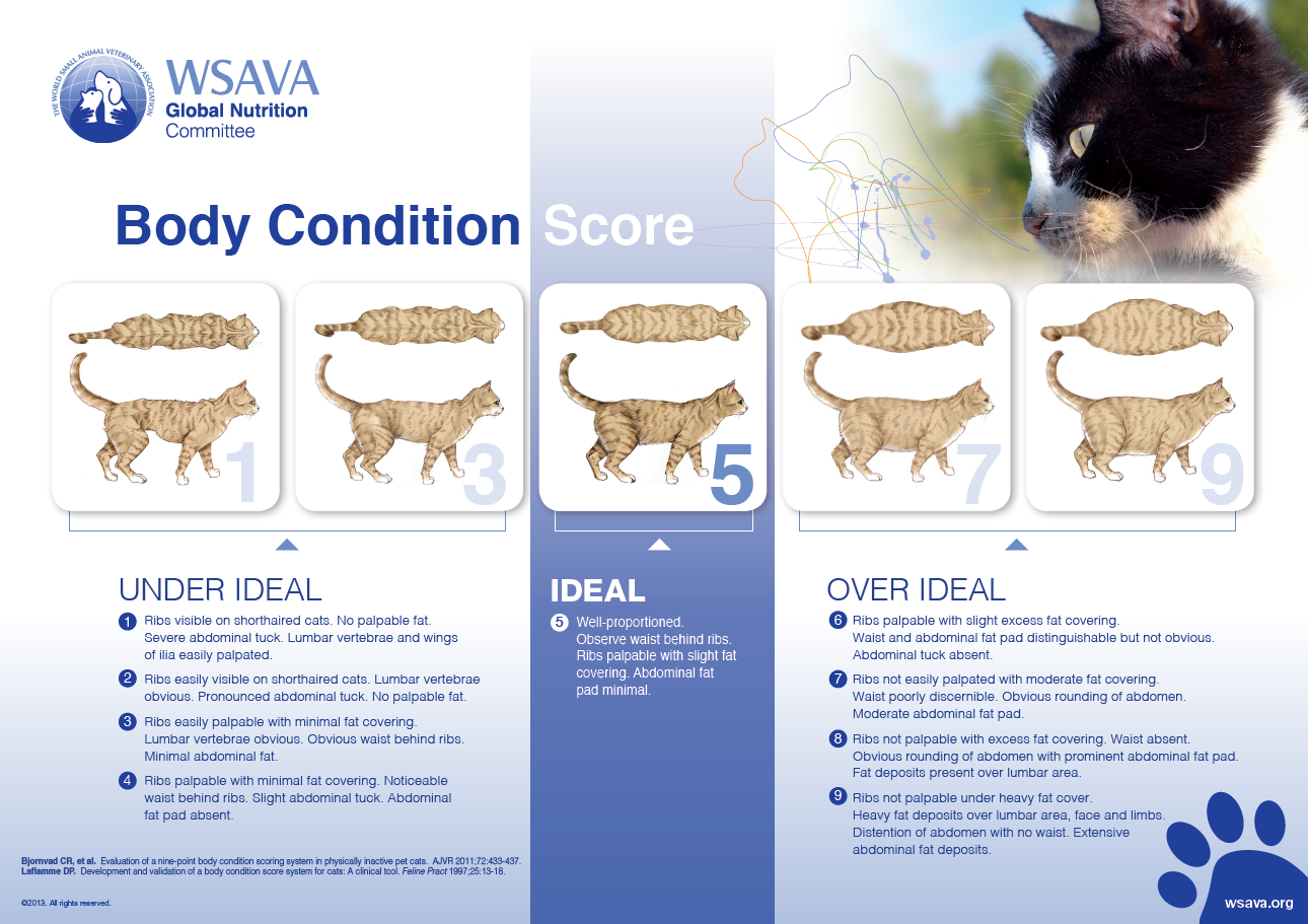Cat Body Condition Score Chart