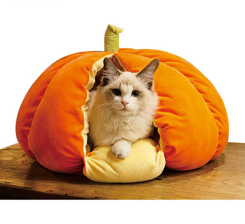 Plump Pumpkin Bed