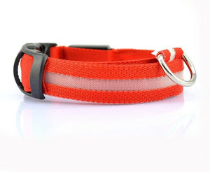 Glow Night Safety Collar