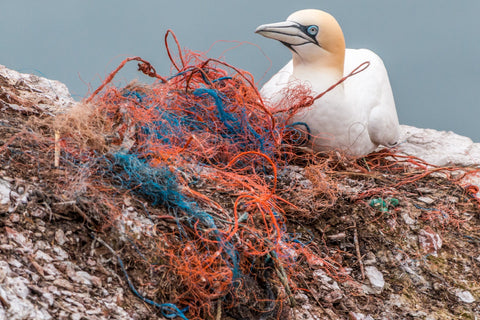 Wild bird sitting on a rock next to a mass of tangled plastic fibres