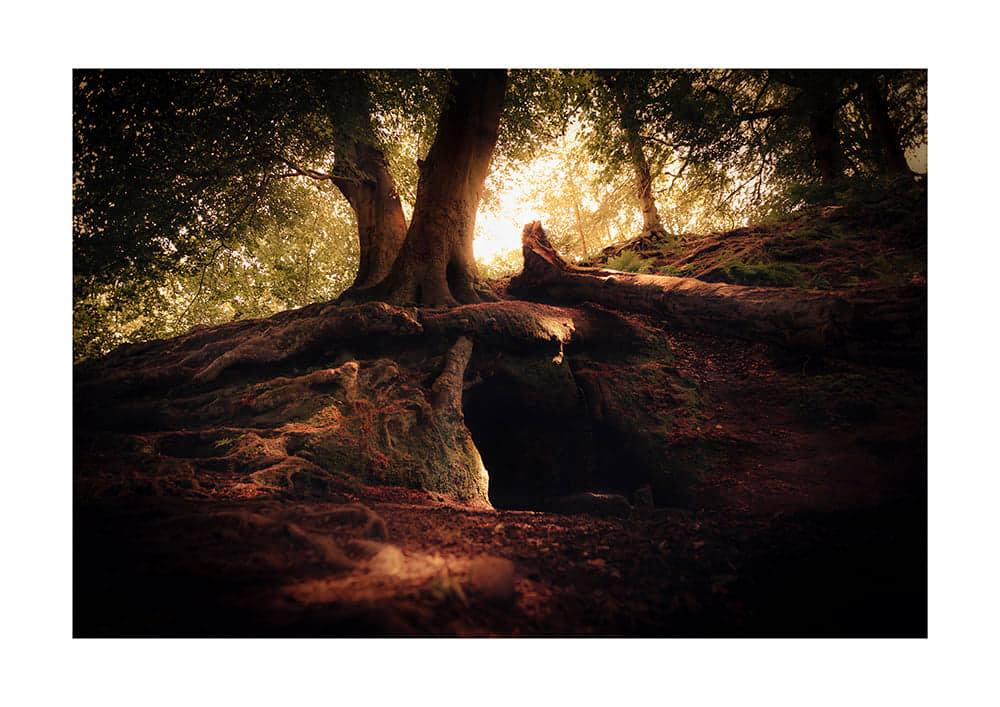 Forest photography by Jamie massie