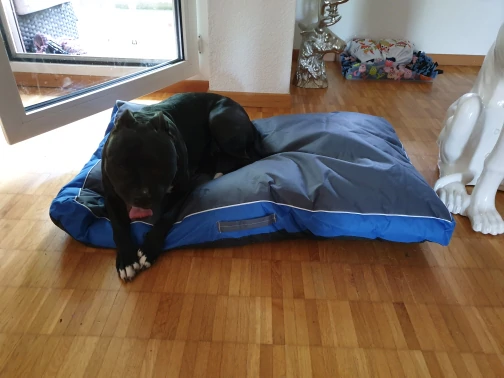 Our Top 5 Dog Beds For 2020
