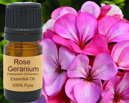 Rose Geranium Essential Oil 5 ml, 10 ml or 15 ml