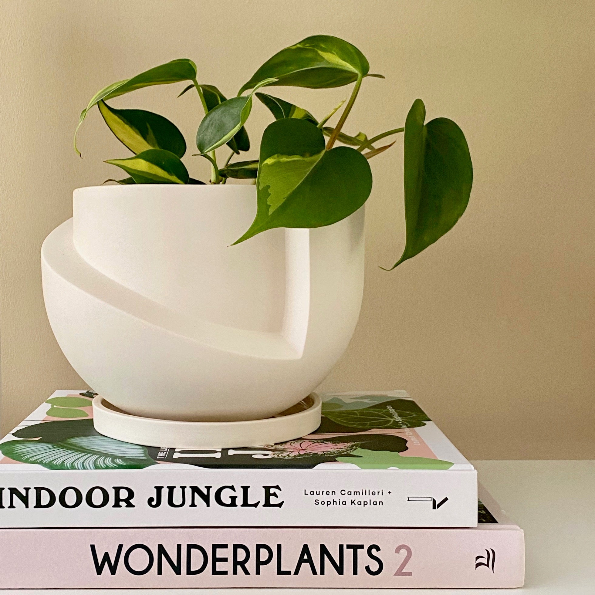 Plant of the Month - Philodendron Brasil
