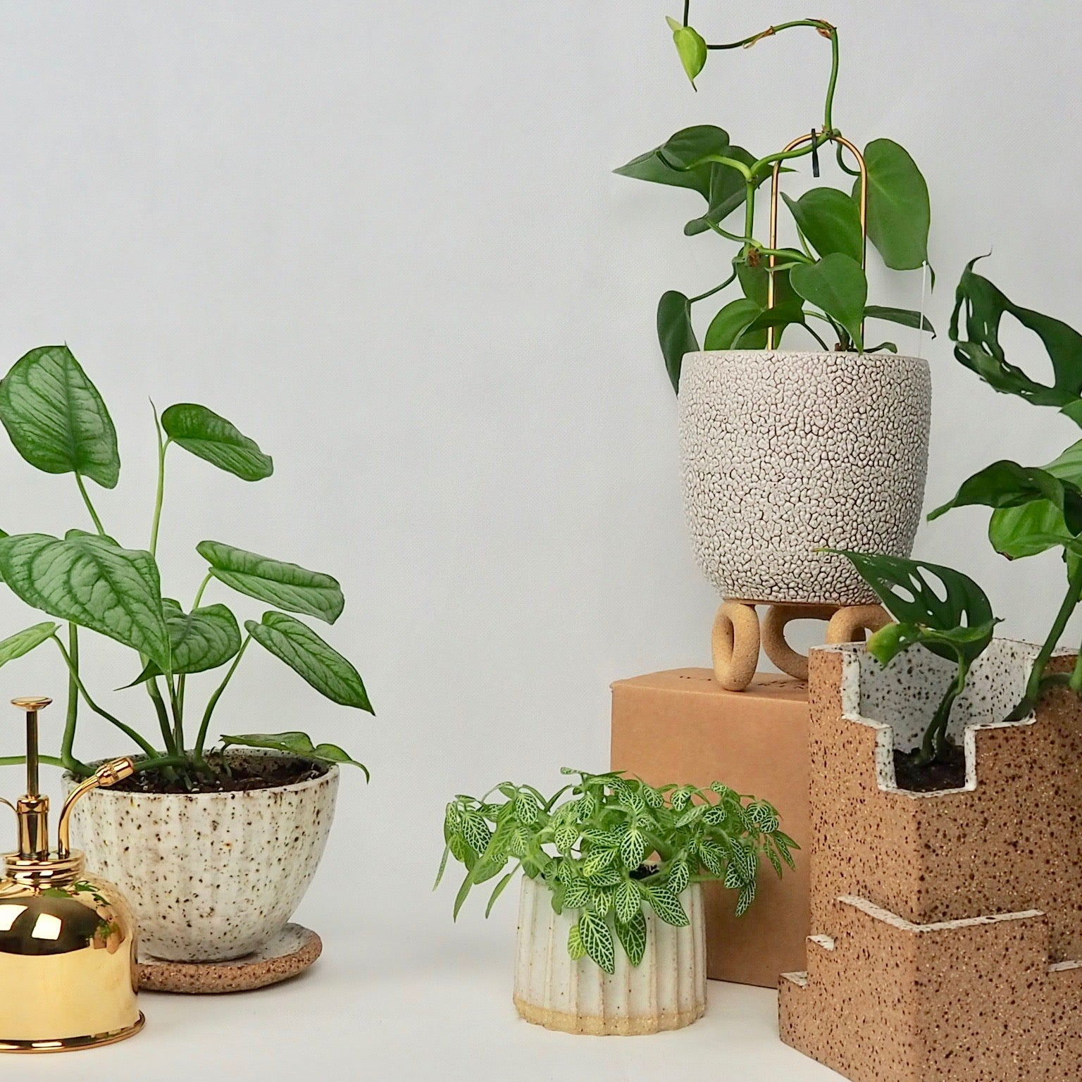 Indoor Plant Care Basics