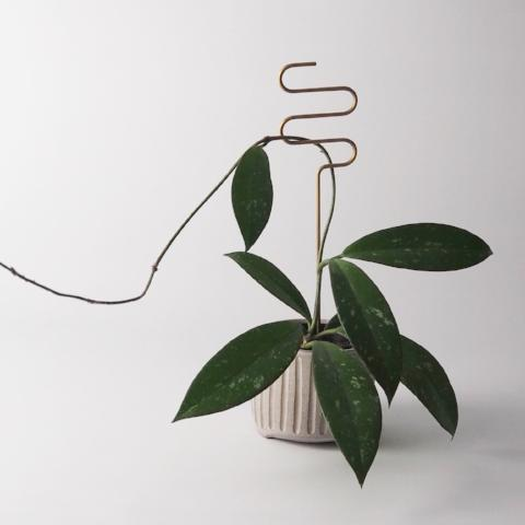 Brass Plant Sticks (Pre-Order Available Now)