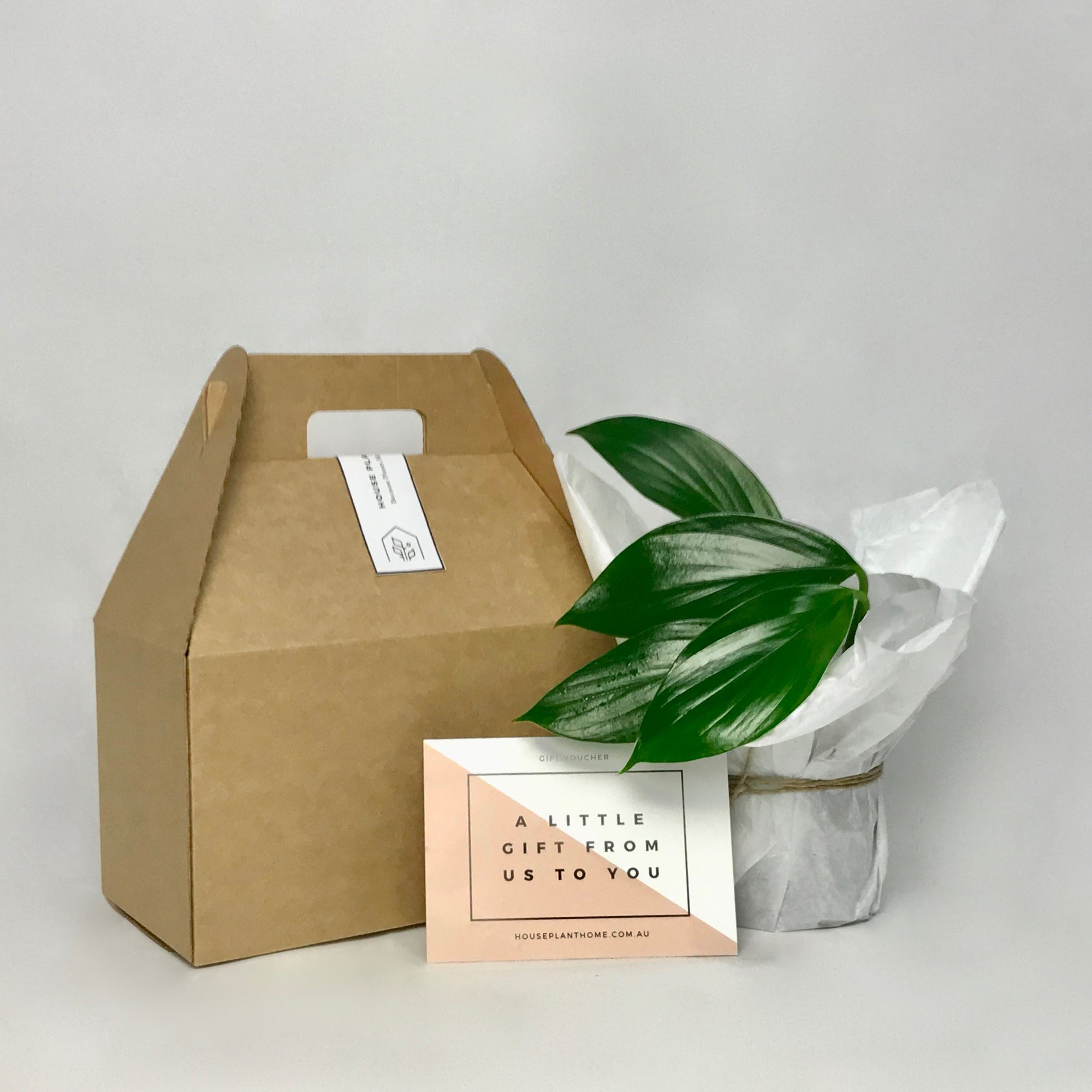 [best_indoor_plants][plants_online][online_ plant_gift], [plant_ gifts], [houseplant gifts], [handmade_ceramics], [plant_delivery_ melbourne], [living_ gifts]- House Plant Home