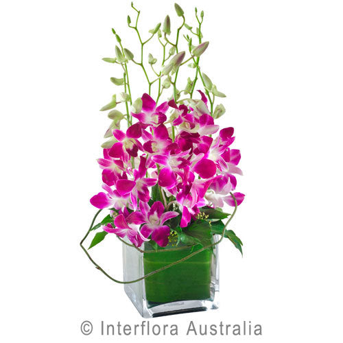 Violetta 337 - Interflora