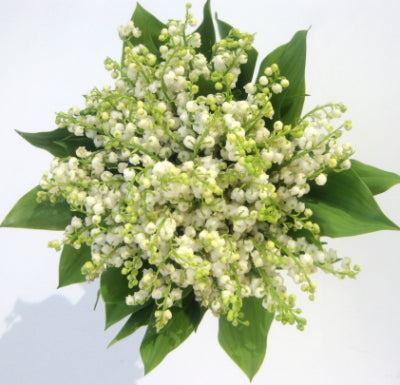 Bridal formal posy 72