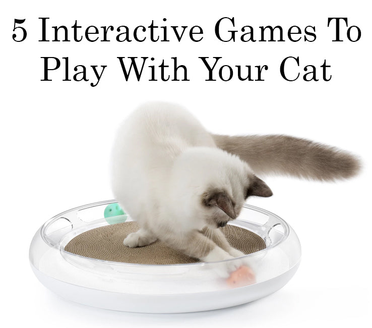 5 Fun And Interactive Games To Play With Your Cat
