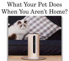 What Your Pet Does When You Aren't Home?
