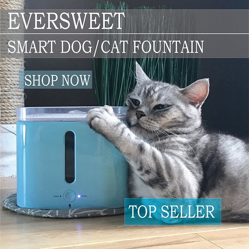 PETKIT Smart Filtered Cat Fountain