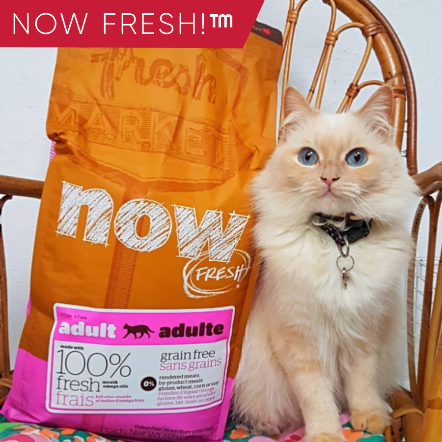Now Fresh on PetProject.HK