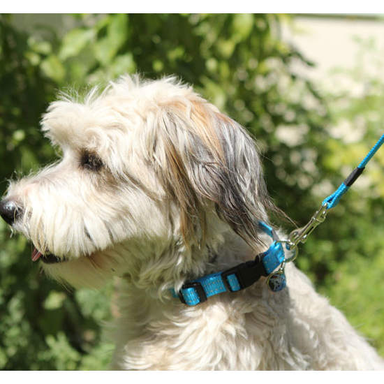 Rogz - Leads - Utility Fixed Lead - PetProject.HK