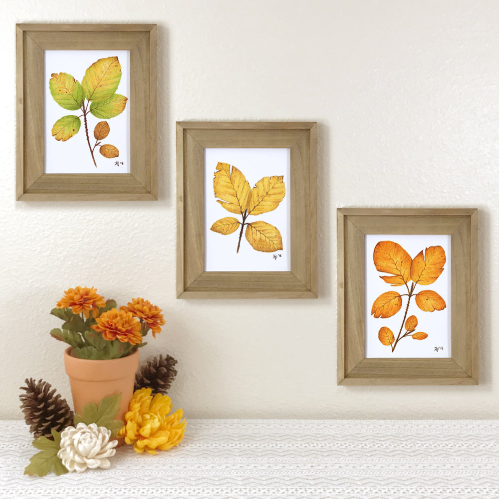 Set of 3 prints of beech leaves in autumn colors of green, yellow gold, and orange.