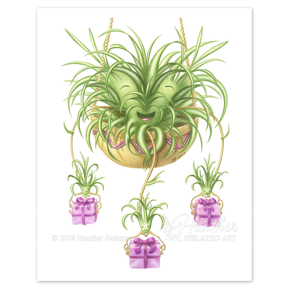 Spider Plant Gifts
