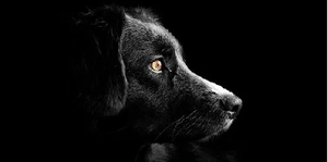 "<big><strong><span style=""color: #ff9900;"">Condominium Governance: Navigating Florida's New Emotional Support Animal Law</span></strong></big>"