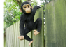 Hanging Monkey for decoration