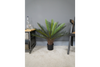 Artificial Cycad – Small to recall history
