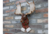 Moose Head Wall Decoration to adorn the wall