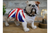 British Bulldog for courage