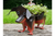 Sausage Dog Planter for planting with tradition