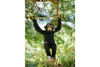 Outdoor Patio Cute Large Hanging Monkey Garden Ornament