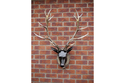 Dark Brown Cold Cast Polyresin Made Large Wall Stag Head