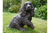 Black Resin Spaniel Dog Statue Figure