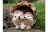 Hedgehogs in Log for happiness, motherhood, and calmness