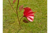 Galvanised Garden Outdoor Red Metal Flower Stake