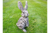 Resin Made Hand Carved Outdoor-Indoor Rabbit With Wood Effect