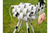 Metal Cow Garden Lawn Ornament Statue