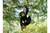 Climbing Hanging Monkey Garden Ornament