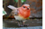 Robin Perched Resin Garden Ornament Outdoor