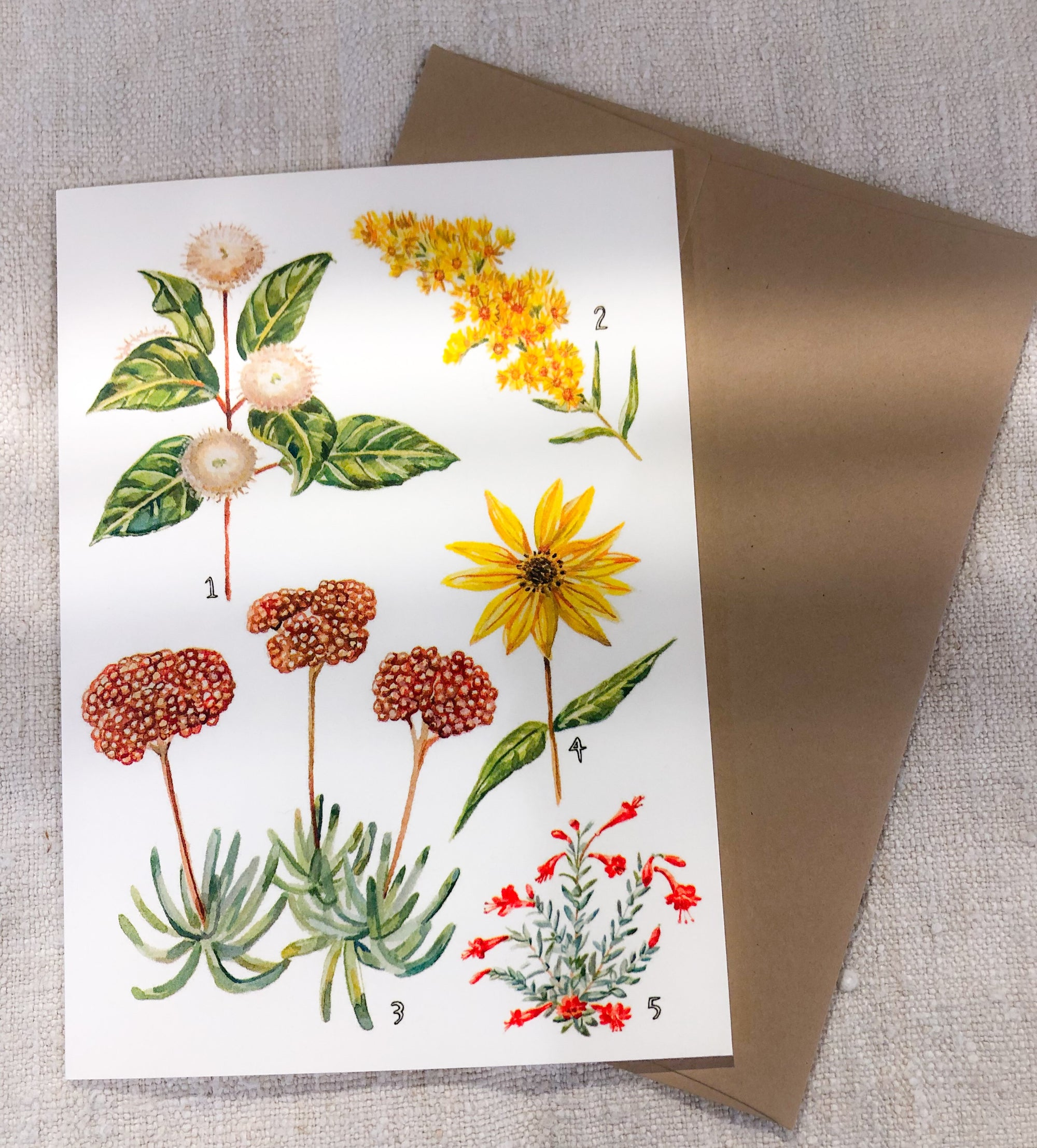 California Native Plants Card + Autumn